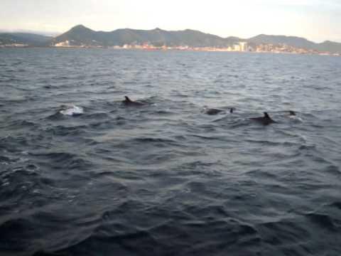 Dolphins in Trinidad Waters 2010.mov