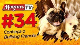BULLDOG FRANCÊS | MagnusTV Ep.34