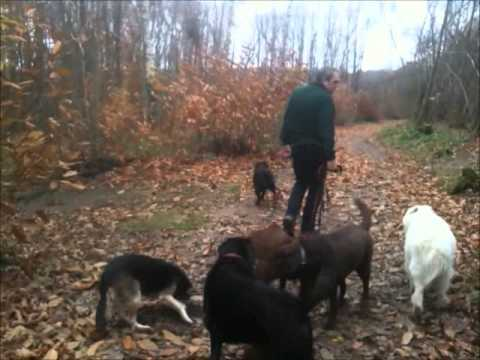 7 Dogs on a walk in Guestling Woods