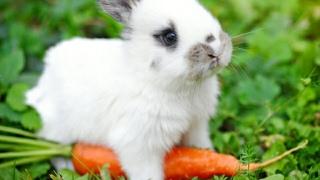 El pobre conejo de pascua 🤣👉Easter