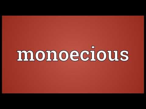 Monoecious Meaning