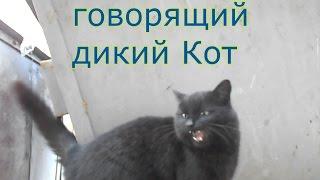 Крутой Редкий Кот!  Классные Звуки Кошки! 2 Серия.