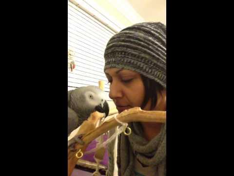 Affectionate parrot