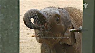 Животных в зоопарках Европы спасают от жары (новости)
