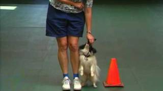 Small Dog Fun Competing With A Small Dog- Novice Obedience