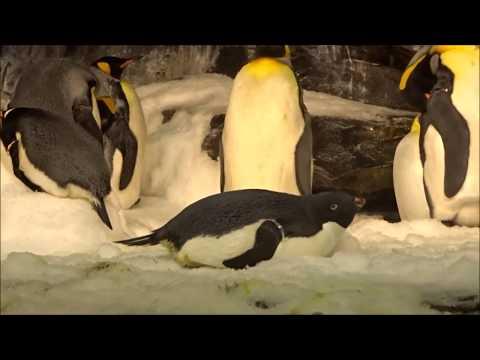 SeaWorld|Orlando, Florida- Shamu show 🐳🎢