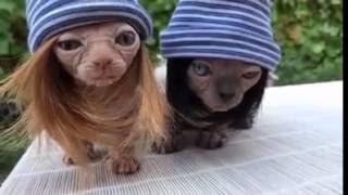 Новинка- 2016 , Смешные животные- Полюби меня!   Кошки- крошки мои !!!!!!