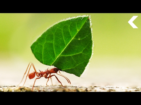 Ants Are Growing Food and They're Better at It Than We Are