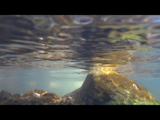 NM@002 UnderwaterMood