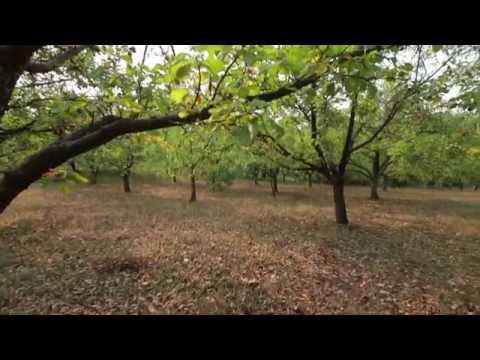 Organic Food Serbia - Healthy Living