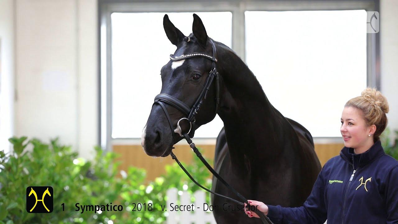 Ventes du studbook Hanovrien : 105.000€ pour le Top Price, 3 chevaux vendus en France