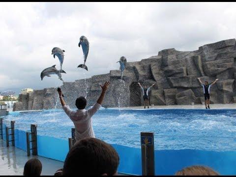 ბათუმის დელფინარიუმი (Batumi Dolphinarium) - GEORGIA