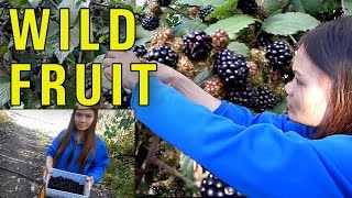 Wild Blackberries Fruit Picking Adventure, Blackberry Recipes