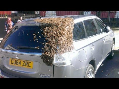 20 אלף דבורים על אוטו