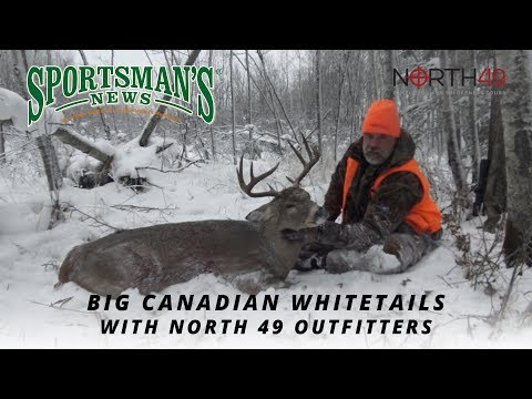 Big Canadian Whitetails With North 49 Outfitters