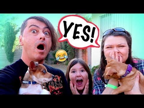 MOM & DAD CAN'T SAY NO!~Kids in Charge for 24hrs!