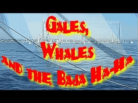 Gales, Whales and the Baja Ha-Ha