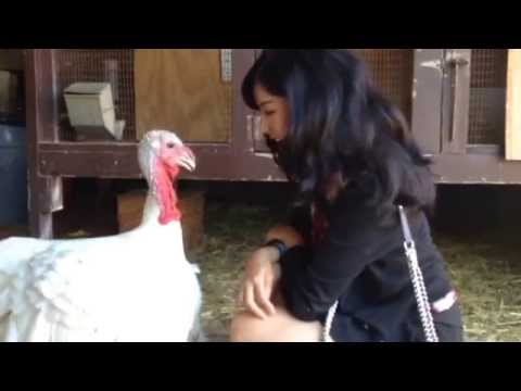 I had no idea turkeys could be so friendly or adorable!