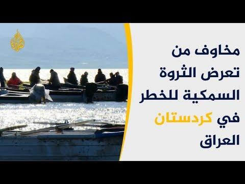 بسبب البدء المبكر لموسم التزاوج.. الثروة السمكية بكردستان بخطر  - نشر قبل 22 دقيقة