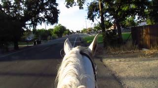 Motorcycle guy zooms past horse - no accident