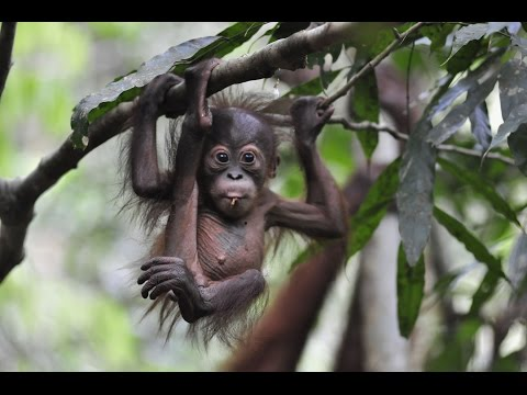 "Help save the ""Thirty Hills"" Ecosystem in Sumatra 