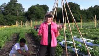 How to Grow a Green Bean Teepee Top 10 Video