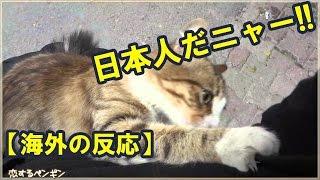 【海外の反応】中国人には絶対に近づかないトルコの猫!が、日本人だと...