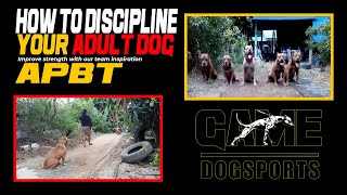 How To Discipline Your Adult Dog The RIGHT WAY -  Rednose Thailand