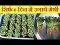 Grow Methi/Fenugreek in just 6 days at home | सिर्फ 6 दिन उगाये मेथी | Organic Methi in soil