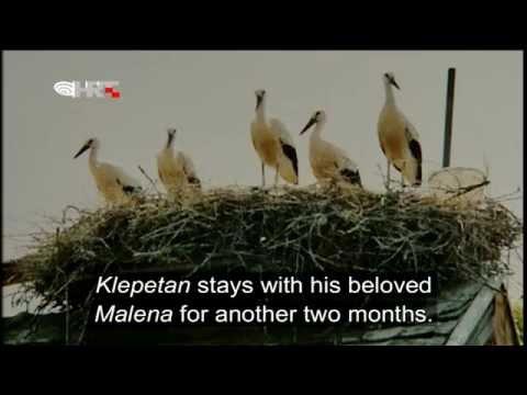 A stork love story
