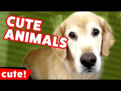 Funniest Cute Pet & Animal Reactions, Bloopers & Moments of 2016 Weekly Compilation | Kyoot Animals