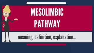 What is MESOLIMBIC PATHWAY? What does MESOLIMBIC PATHWAY mean? MESOLIMBIC PATHWAY meaning