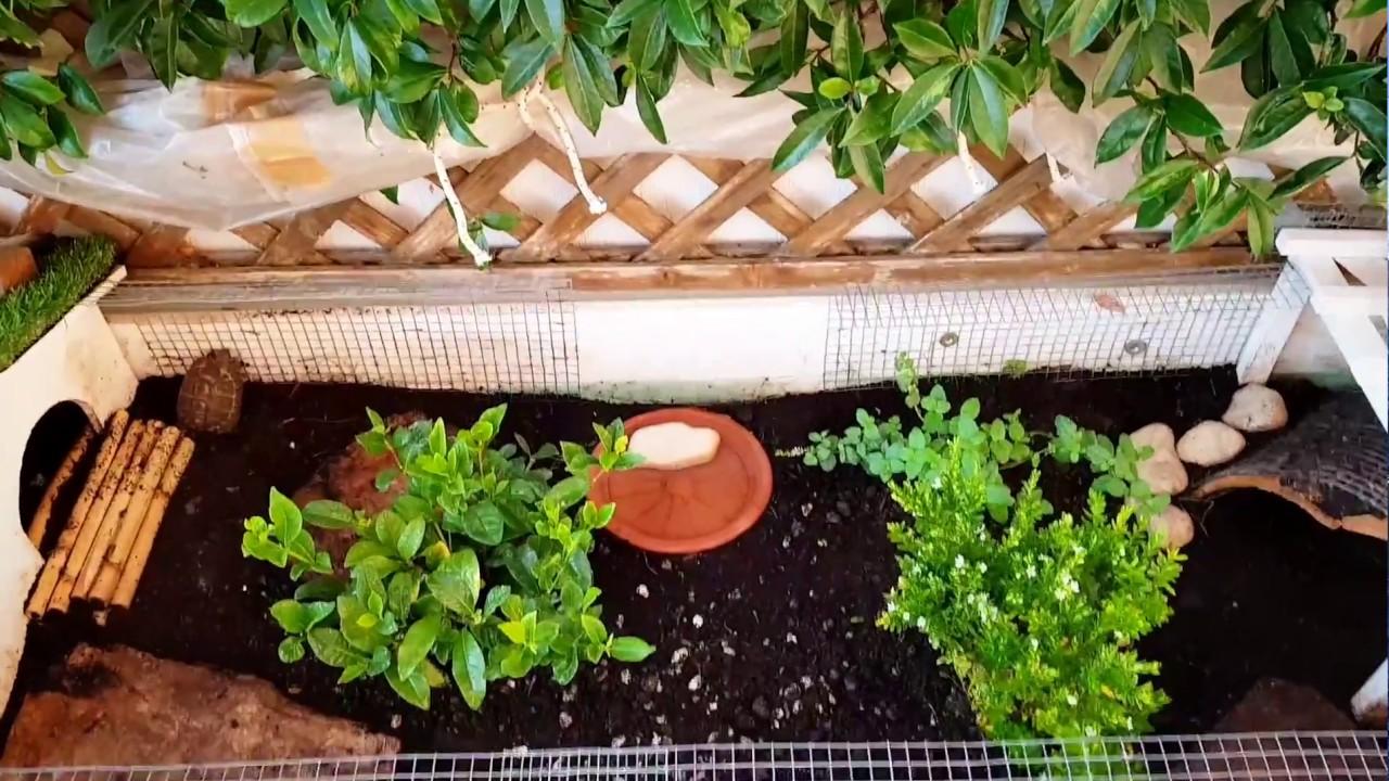terrario per tartarughe di terra 2 0 aggiornamento dal