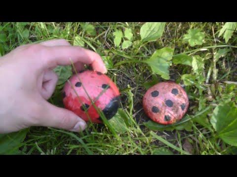 Камень-жук :D Раскраска камней для сада и дачи