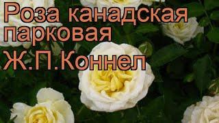 видео Купить розы поштучно недорого в Москве с доставкой