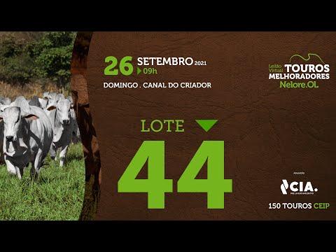 LOTE 44 - LEILÃO VIRTUAL DE TOUROS 2021 NELORE OL - CEIP