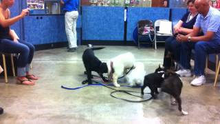 Puppy Training Class; Ages 4 To 6 Months; Training Class In Petsmart