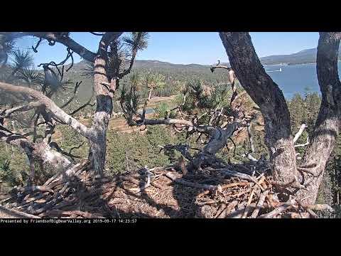 Big Bear Bald Eagle Nest Cam