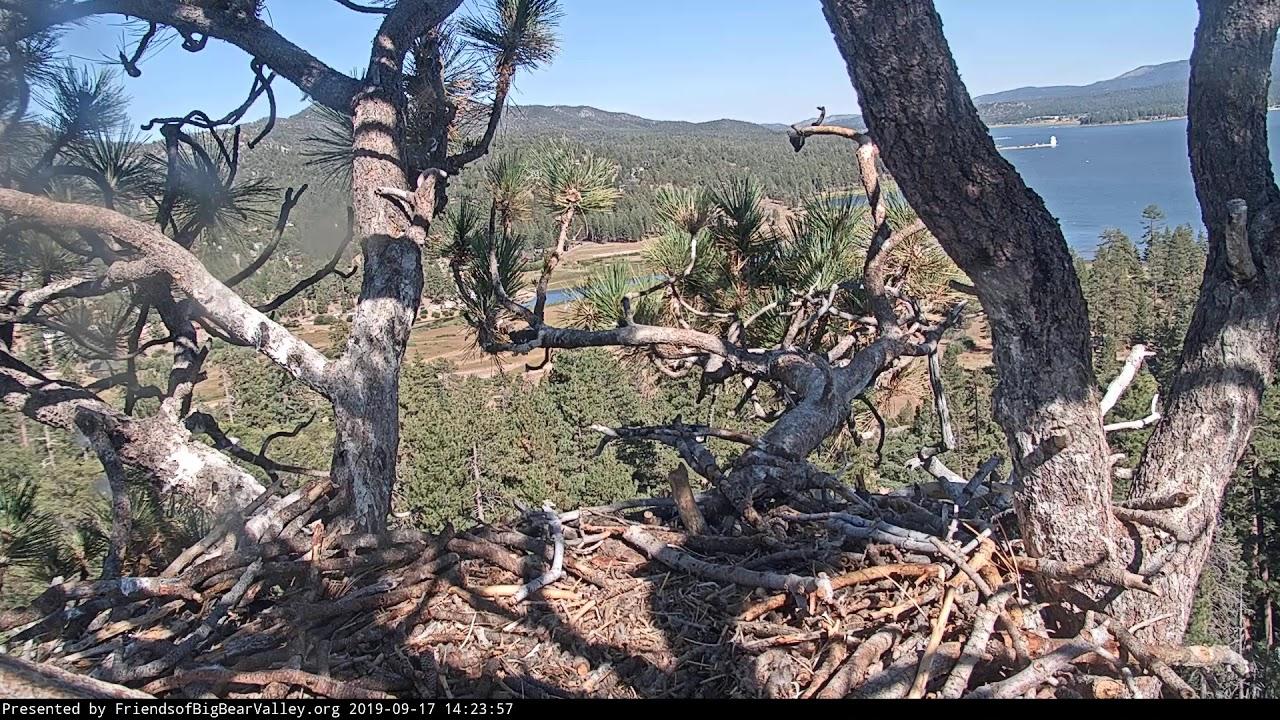 Big Bear Bald Eagle Nest Cam - YouTube
