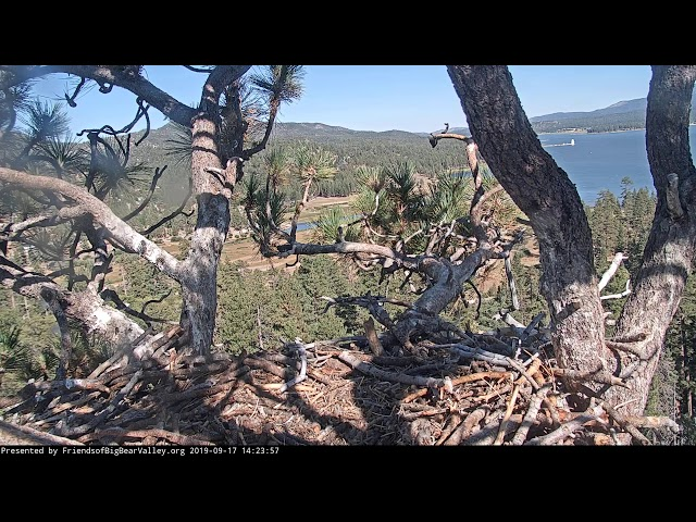 Big Bear Bald Eagle Nest Cam