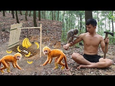 Primitive Technology: Amazing Quick Monkey Trap Using Bamboo