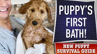 How To NOT Totally Screw Up Your Puppy's First Bath! (EP 15)