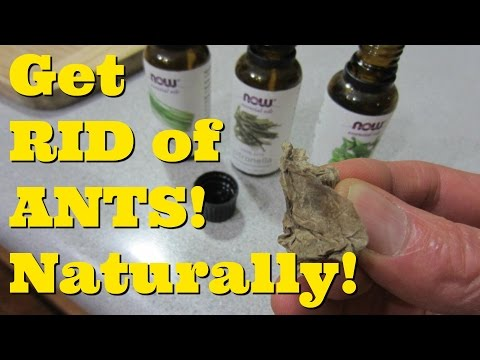 How to GET RID of ANTS in Your Kitchen!Natural Remedy for Ants!