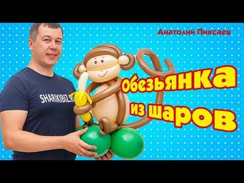 Шароведов видео уроки обезьяна