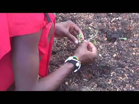 Holistic Living Veganic Gardening Made Simple