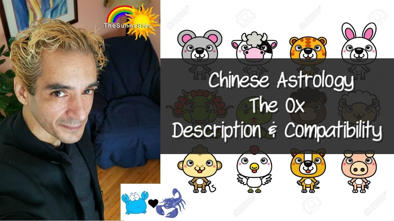 Chinese Astrology: The Ox - Personality & Compatibility