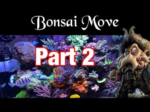 eareef-pro-900---episode-60---bonsai-move-(-part-2-)