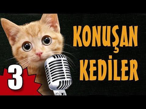 Konuşan Kediler 3 - En Komik Kedi ları
