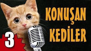 Konuşan Kediler 3 - En Komik Kedi Videoları
