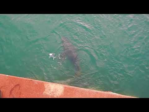 Cape York Fishing